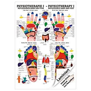 Sport-Tec Reflexzonen Poster Anatomie 70×50 cm medizinische Lehrmittel