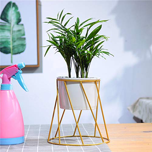 Furnily Blumentopf mit weißem Keramik-Blumentopf, 2 Stück Modern Rounded shape-01