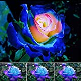 Ncient 30pcs/Sac Graines Semences de Fleurs Rosier, Rose Fluorescentes Lumineuses Seed Plante Lumineuse de Nuit Semences Graines à Planter Plante Rare Bonsaï de Jardin Balcon