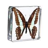 Homyl Briefbeschwerer mit echtem Insekte, eingebettet in glasklarem Kunstharz, Geschenk für Kinder und Erwachsene - Graphium Sarpedon