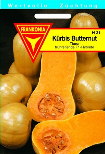 Frankonia H31 Kürbis Butternut Tiana, Samen