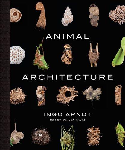 Animal Architecture by Ingo Arndt (2014-05-01)