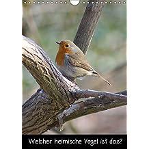 Welcher heimischer Vogel ist das? (Posterbuch DIN A4 hoch): Vögel in Deutschland (Posterbuch, 14 Seiten) (CALVENDO Tiere) [Taschenbuch] [Nov 13, 2012] kattobello, k.A.