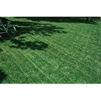 Pinkdose Blackjack Bermudagrass Seed, Perfect for The Home Lawn, Parks or Sports Fields. (1 Oz)