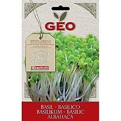 Semillas germinado Albahaca, - Bavicchi GEO, 5g
