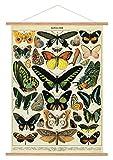 Cavallini Papers & Co. Cavallini Vintage Schmetterlinge zum Aufhängen Poster