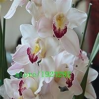 2 rossi Oxalis acetosella Fiore Oxalis viola