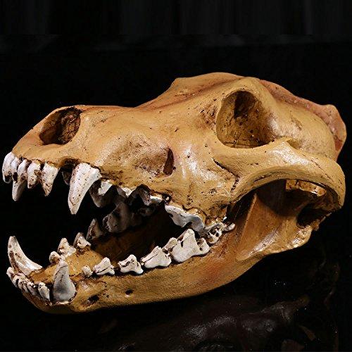 WSJDE Realistische Wolf Hunde Schädel Modell Harz Skelett Medizinische Skulptur Weiß Für Sammlung Handgemachte Halloween Dekoration - Monster High Hunde Kostüm