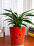 #2: Rolling Nature Air Purifying Spider Plant in Orange Bucket Aroez Ceramic Pot