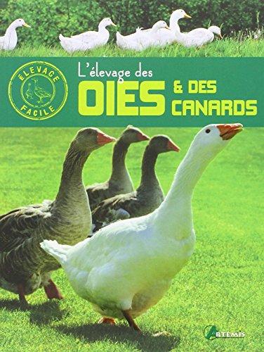 elevage-des-oies-et-canards