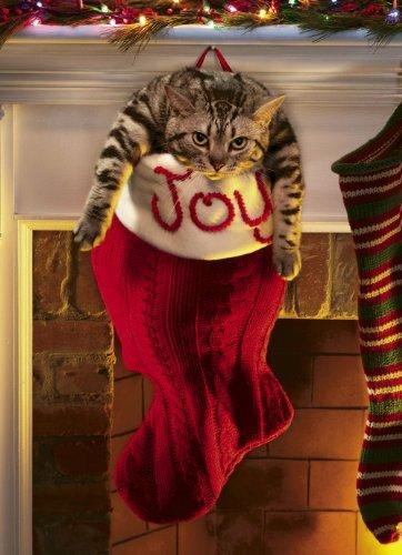 Avanti Weihnachtskarten, Motiv Engel Kitty, 10 Karten 10-Count Overstuffed Stocking -