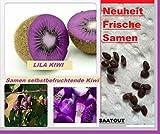 25x Lila Kiwi Selbstbefruchtend Samen Saatgut Pflanze Frucht Rarität Obst