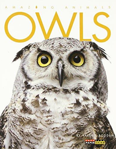Owls (Amazing Animals)