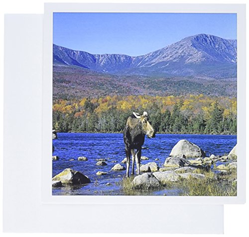 3dRose Kuh Elch Wildtiere Mt. Katahdin Gc_90643_2 Grußkarten, Motiv Howie Garber, 15,2 x 15,2 cm, 12 Stück -