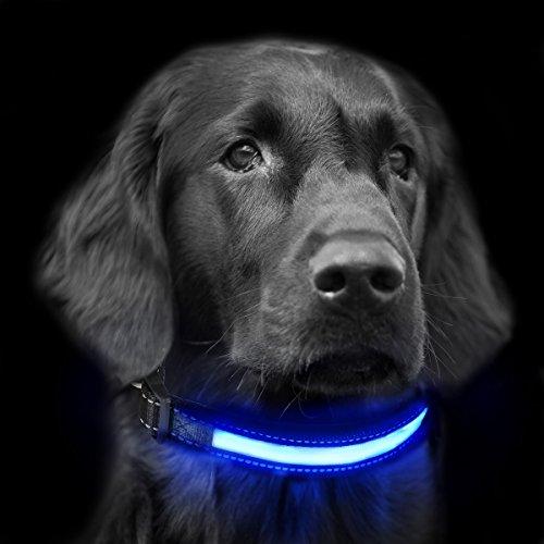 LEDHalsbandHund, Focuspet Leuchtendes Halsband Led Hundehalsband USB Und Solarenergie Aufladba Nacht Hundeband Einstellbarer Halsumfang Sicherheits Halsband für Hunde, Katzen usw. M38-48cm L48-60cm (Led-hundehalsband Usb Aufladbare)
