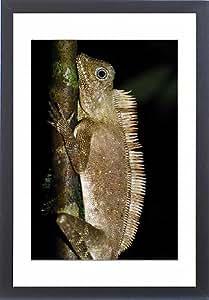 Tableau encadré Motif forêt de Peigne avec blason Lézard Agamid Peigne à Crête Dragon