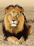 Artland Qualitätsbilder I Glasbilder Deko Bilder Eric Isselèe Löwe Tiere Wildtiere Raubkatze Fotografie Ocker 80 x 60 x 1,1 cm A6ZW
