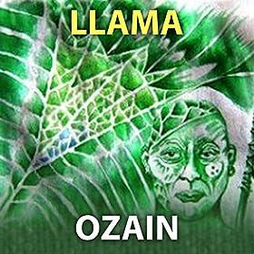 Llama. Ozain (Abbilona Digital)