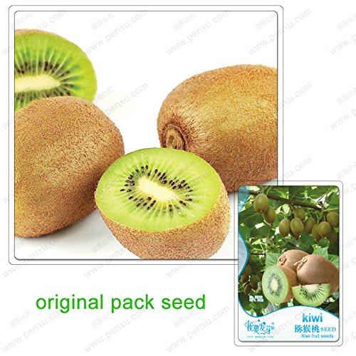 30 graines / Pack, plantes mini-Thai balcon bonsaïs en pot de semences biologiques délicieux fruit nutritif petit