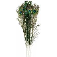 Naturale reale piume di pavone Grande UK (30–35cm), multicolour, confezione da 25