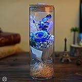 ZHUOTOP konservierte rote Rose, mit Fernbedienung, Valentinstag Geschenk, blau