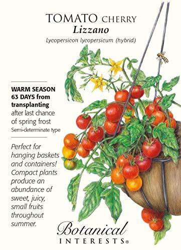 Vistaric Lizzano Kirschtomate - 10 Samen - Botanische Interessen