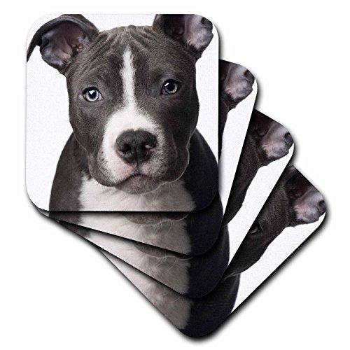 3drose cst42403American Pit Bull Terrier Puppy Keramik Fliesen Untersetzer, Set von 4