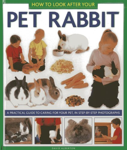 How to Look After Your Pet Rabbit