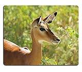 Die besten Liili Schreibtische - Mousepads Portrait Of A Buchse Impala aepyceros Melampus Bewertungen