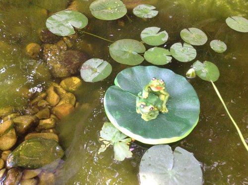 chdekoration Schwimmform Teichfrosch Teichdeko Gartendekoration ()