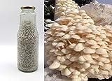 Bio Enoki Körner Pilzbrut-Pilze selber züchten-Körnerbrut