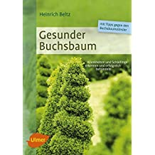 Gesunder Buchsbaum: Krankheiten und Schädlinge erkennen und erfolgreich behandeln