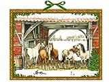 Pferde-Winter