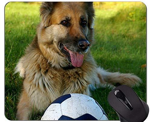 Hund, der Schäferhund-Tierbild-Mausunterlage, Schäferhund-Büro-Mausunterlage laufen lässt
