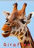 Giraffen (Wandkalender 2019 DIN A3 hoch): Schöne Gesichter auf langen und eleganten Hälsen (Monatskalender, 14 Seiten ) (CALVENDO Tiere) -