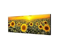 Idea Regalo - Leinwandparadies, quadro da parete su tela, panorama campo di girasoli, tramonto 150x 50cm
