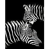 Zqylg Pintando por Números Pintura por Números DIY Un Par De Cebras De Peluche Animal Lienzo Decoración De La Boda Art Picture Regalo