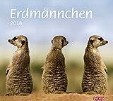 times&more Erdmännchen Bildkalender - Kalender 2018