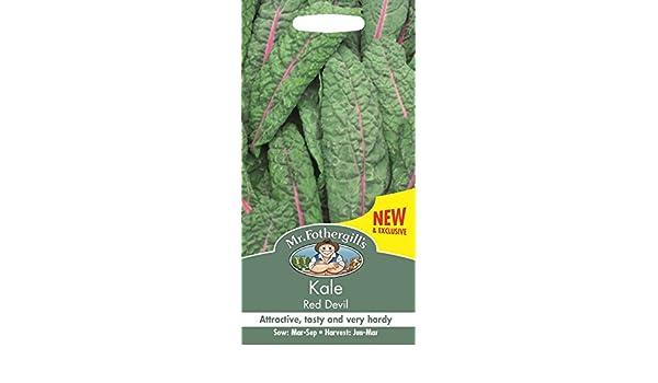 Mr Fothergills Seed Kale Red Devil