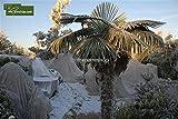 Klimatuch - Winterschutz für Pflanzen, 1000cm x 400cm (40m2)
