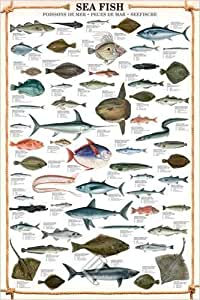 Grande affiche plastifiée Sea Fish POSTER poissons de mer dimensions approximativement 36x24 inches (91.5x61cm)