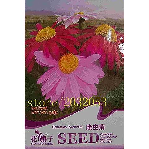 semi abbastanza seme fiori rari colore impianto