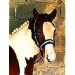 Meister Comfort Headcollar for Nobility, Travel, Stable Horse Headcollar Halter 16
