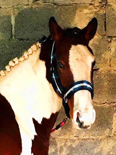 Meister Comfort Headcollar for Nobility, Travel, Stable Horse Headcollar Halter 6