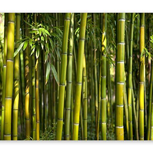 murando - Fototapete 400x280 cm - Vlies Tapete - Moderne Wanddeko - Design Tapete - Wandtapete - Wand Dekoration - Bambus Baum Bäume Bambusweld Natur Wald grün Asien Asia b-B-0072-a-b