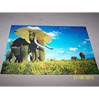 Elephants 3D Picture, A 3D Lenticular Elephants Wall Art Ready To Frame, 34.5 x 24.5 cm by A & W