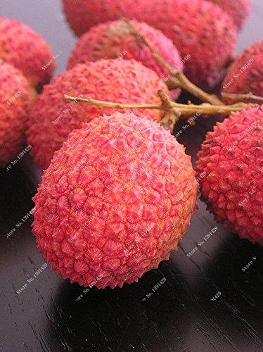 saisonale frische 10 Samen DIY Gartenbonsai Obst Rare Litschi Süßigkeit (Saisonale Visionen)