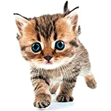 Suchergebnis Auf Amazon De Fur Wandtattoo Katze