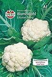 Blumenkohl, Erfurter Zwerg