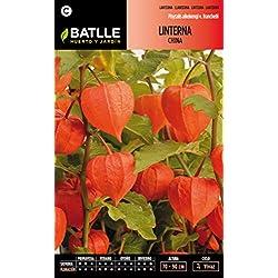 Semillas Batlle 094801BOLS - Linterna China